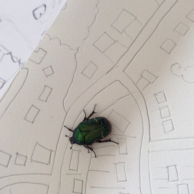 Rose chafer helping me with giant map today
