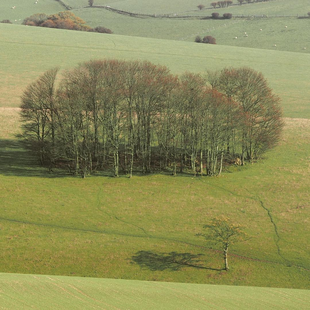 clump southdownsnationalpark breakbetweenstorms completelysoaked ditchlingbeacon stanmer sycamore